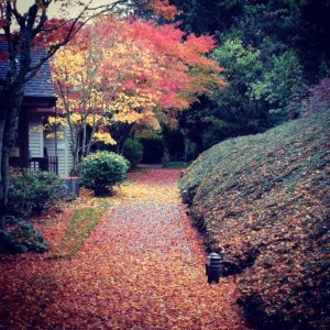 It's this kind of fall color scene that we have to look forward to now that cold nights are upon us in Lake Oswego.