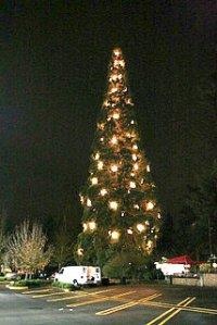 holiday tree lighting edited