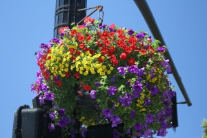 flower basket 1
